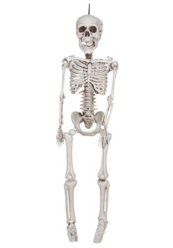 12 Inch Plastic Realistic Skeleton