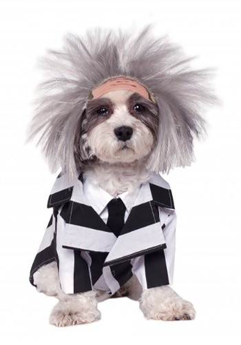 Click Here to buy Beetlejuice Pet Costume from HalloweenCostumes, CDN Funds & Shipping