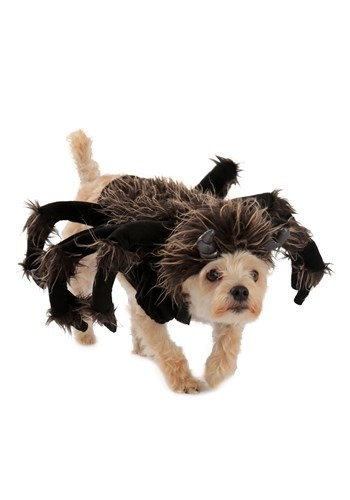 Click Here to buy Tarantula Dog Costume from HalloweenCostumes, CDN Funds & Shipping