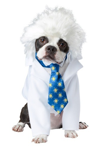 Click Here to buy Al-bark Einstein Pet Costume from HalloweenCostumes, CDN Funds & Shipping