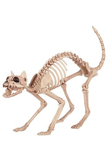 Skeleton Cat