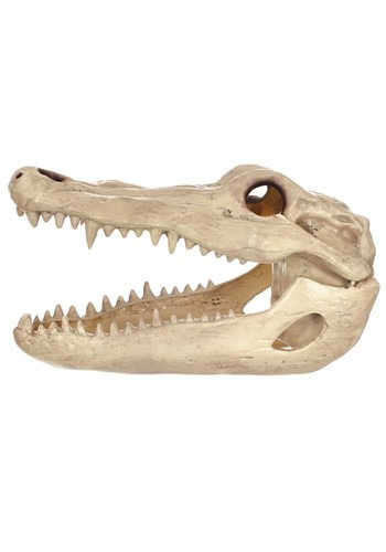"13.5"" Alligator Head Skeleton Prop"