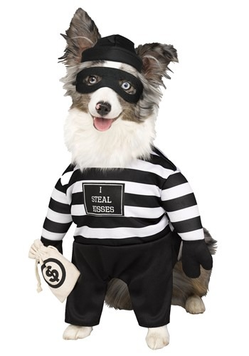 Click Here to buy Pet Robber Pup Costume from HalloweenCostumes, CDN Funds & Shipping