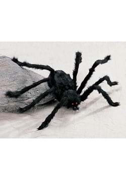 Medium Hairy Black Spider