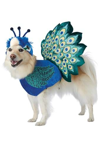 Pet Costume: Pretty as a Peacock
